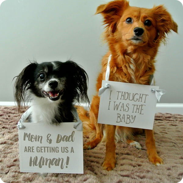 Dogs with baby announcement signs